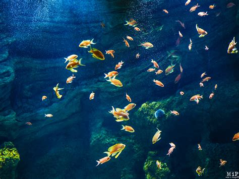 banyuls sur mer aquarium 6290595 made in perpignan