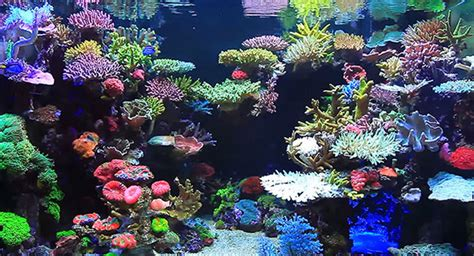 Reef Aquarium Aquascaping real reef aquascaping with youngil moon
