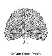 peacock coloring vector for adults peacock coloring book for adults vector illustration anti