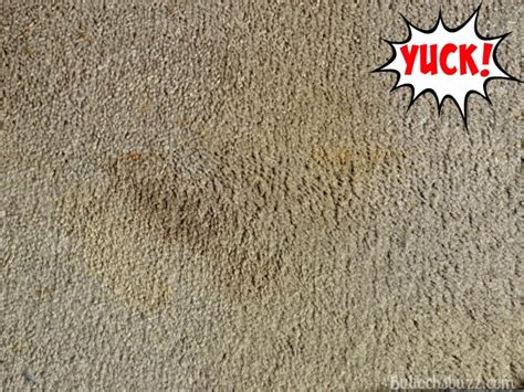 Cleaning Cat Vomit Wool Carpet Castle Carpet Cleaning Mechanicsburg Pa Diy Cleaner For Pet Stains Stain Remover Sanford Fl Can You Spell Professional Services London Layers Cleveland Qld How To Fit Gripper On Concrete Floor