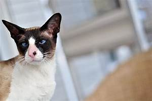 10 cat breeds we can 39 t get enough of