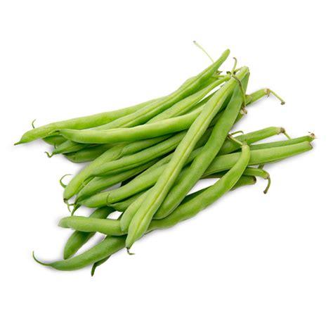 haricot vert ecologie les verts seotoolnet com