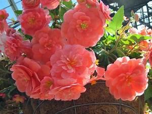 Beautiful Wallpapers For Desktop: Exotic Flowers wallpapers hd