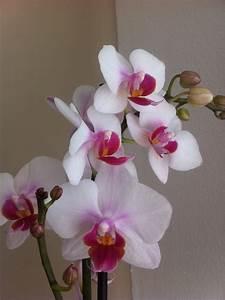 Orchideen Im Glas : vier pfoten in vier w nden orchideen orchideen orchideen ~ A.2002-acura-tl-radio.info Haus und Dekorationen
