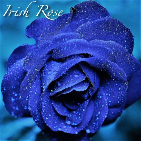 Enjoy our free music downloads of massage and spa music mp3, delightful soft instrumentals for relaxation and healing meditation music for sleep. Irish Rose Relaxing Spa Mp3 Music Download | Music2relax.com