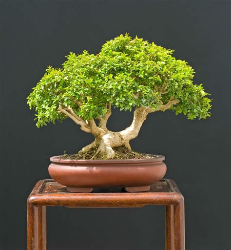 what you put into your indoor compost indoor archives how to grow a bonsai tree