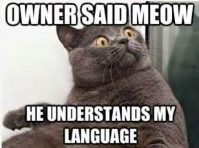 why do cats meow why do cats meow understanding kitty chitchat magic cat