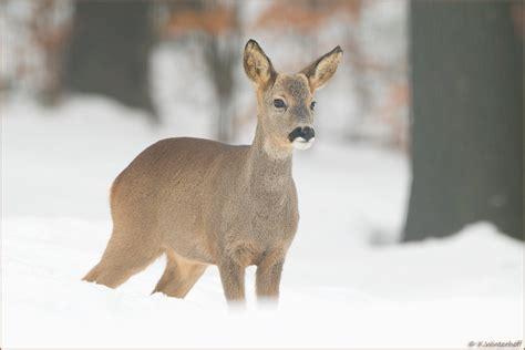 winter wonderland forum fuer naturfotografen