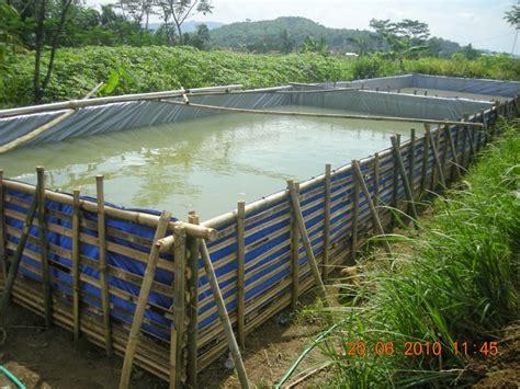 membangun usaha perikanan daerah pinggiran sinar bawal farm
