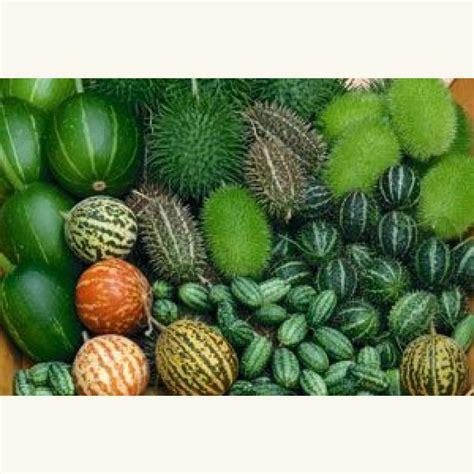 Mini Gurken Pflanzen Kaufen by Gurken Pflanzen Kaufen Mini Snack Gurken 39 Ministars 39