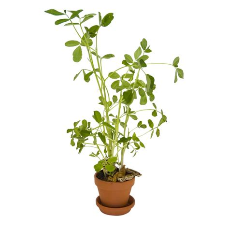 culture en pot 28 images la culture du persil en pot les8jika au jardin culture en sac et