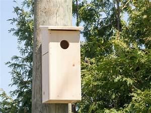 Plan Nichoir Oiseaux : accueillir des oiseaux au jardin nichoirs ou abris naturels ~ Melissatoandfro.com Idées de Décoration