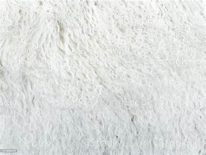 Texture Fur Carpet Animal Abstract Animals Material