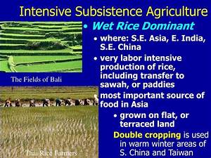 PPT - The Geography of Agriculture PowerPoint Presentation ...