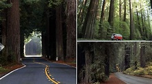 Here's why Avenue of the Giants is one of America's most ...