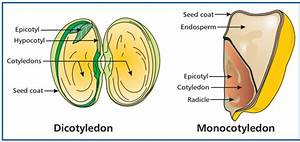 Seeds And Fruits  Concepts  Development Of A Fruit And
