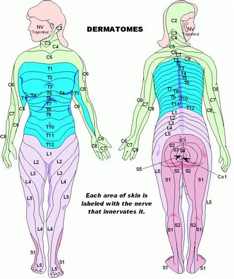 dermatomes mycerebellarstrokerecovery