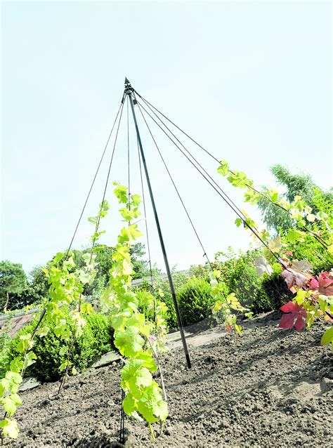 Gardman 21m May Pole Plant Support Structure For Peas