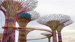 Biomimicry & Design: Lotus Building & Super-Trees of