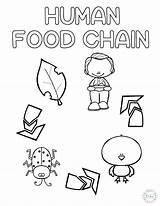 Chain Coloring Preschool Human Craft Ladybug Craftplaylearn Printables Learn Printable Chicken Kindergarten Animalfood Hauseoffweek Gemerkt sketch template