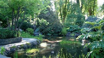 Pond Garden Park Trees Wallpapers Backgrounds Water