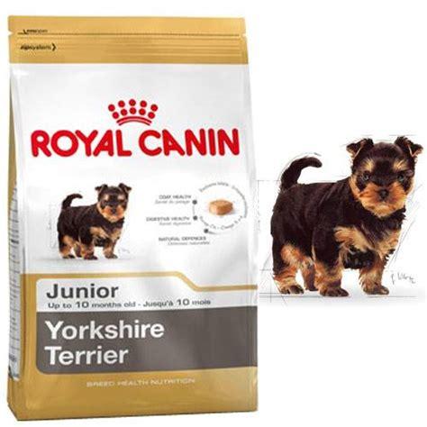 croquettes yorkshire terrier junior pour chien royal