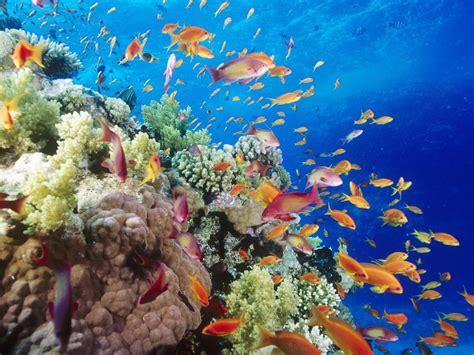 wallpaper pemandangan bawah laut  fakta unik  menarik