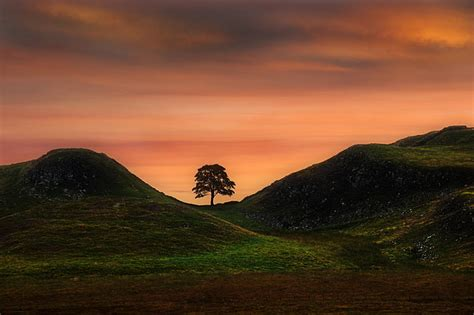 sycamore gap canvas prints wall art  sale
