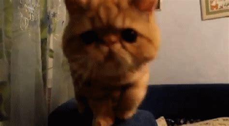 lol cat smocking funny myniceprofilecom