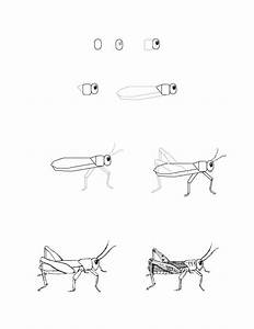 Grasshopper Drawing Lesson | I'm Drawing A Blank ...