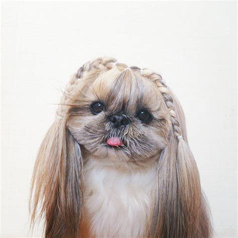 day  dog    hairstyle bored panda