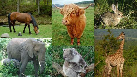 Carnivores, Omnivores & Herbivores  The Vet Is In