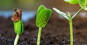 a complete guide to germinating seeds the garden