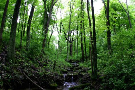 Integrated Program in the Environment: Indiana University ...