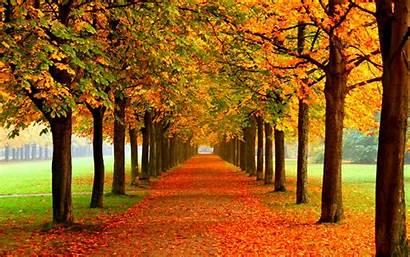 Autumn Leaf Leaves Desktop Fall Wallpapers Trees