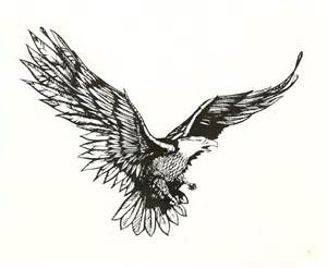 Eagle In-Flight Sketches