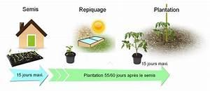 Quand Semer Les Tomates : semis de tomate la maison en f vrier mars tout pour le ~ Melissatoandfro.com Idées de Décoration