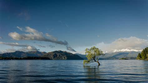 hd single tree   lake wallpaper