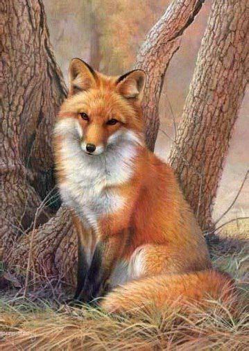 red fox tattoos ideas  pinterest red tail fox