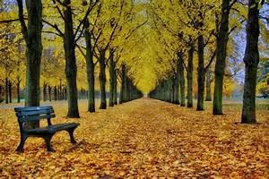 Schöne Herbstbilder Kostenlos : herbst perspektiven bilddatenbank bilder ~ A.2002-acura-tl-radio.info Haus und Dekorationen