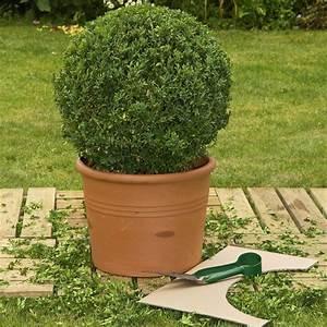 Buchsbaum Rund Schneiden : 129 besten k belpflanzen bilder auf pinterest balkon terrasse und tipps ~ Frokenaadalensverden.com Haus und Dekorationen