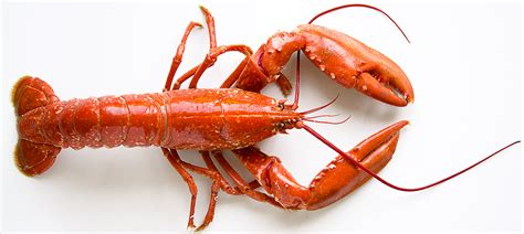 comment cuisiner un homard le homard cuisine à l 39 ouest