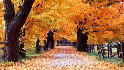 Windows Xp Autumn Wallpapers Fall Aesthetic 4k