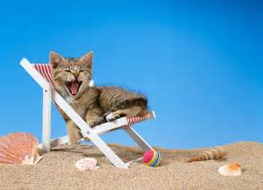 beach chair kitty