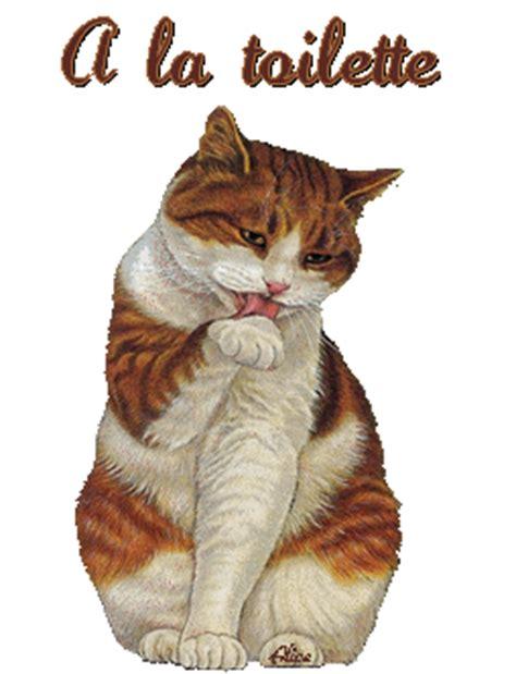 a la toilette chat gif anim 233 gratuit le de