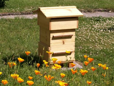 Backyard Honey Bee Hive by Backyard Beekeeping Hives Demystified Wings Worms And