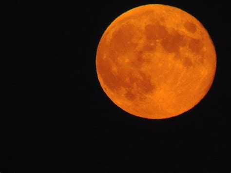 the harvest moon in orange by anastasia konn