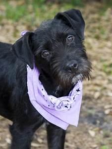 Marlee the Lab/Terrier Mix's Web Page
