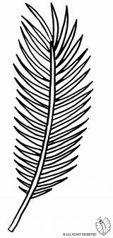 Palm Coloring Leaf Pages Tree Branch Template Clipart Sunday Drawing Line Templates Clip Library Sketch Getdrawings Popular Coloringhome sketch template