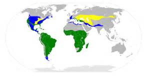 birds of the world s birdwatching adventures plus